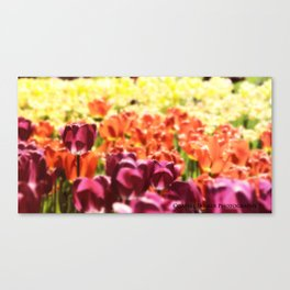 Wishing For Spring Canvas Print