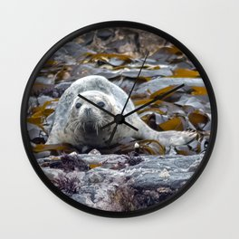 Young seal in the seaweed Wall Clock