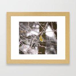 Bijoux d'hiver. Framed Art Print