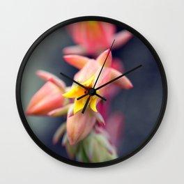Echeveria Runyonii Habitus Inflorescences Wall Clock