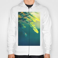 From Deepness to Surface Hoody