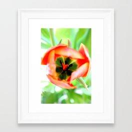 Orange Tulip Framed Art Print