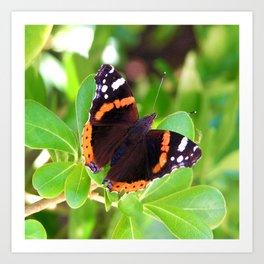 Society6 butterfly Art Print