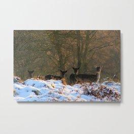 Deer in First Snow of Winter Metal Print