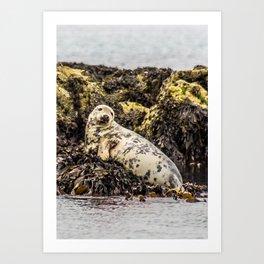 Seal Resting Art Print