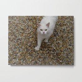 french kitty Metal Print