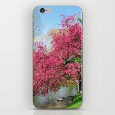Spring Crabapple Blooms iPhone & iPod Skin