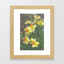 Daffodils! Framed Art Print