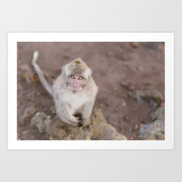 Portrait of a Young Monkey Art Print