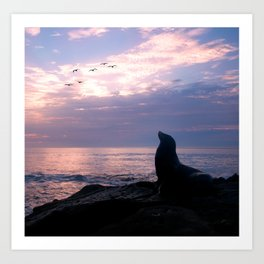La Jolla Sea Lion Art Print