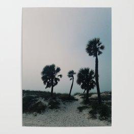 Arecaceae Poster