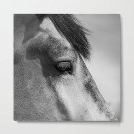 Horse Portrait   Animal Photography Metal Print