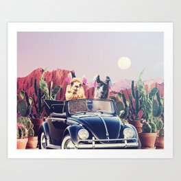 Llamas on the road Art Print