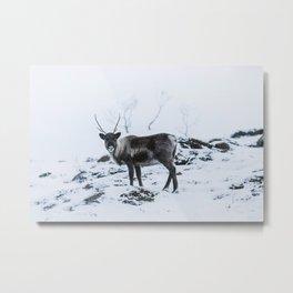 Arctic Beauty  Metal Print