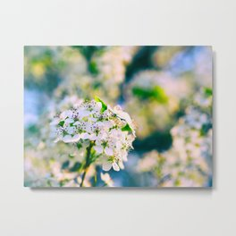 White Blossoms With Green Leaves Metal Print