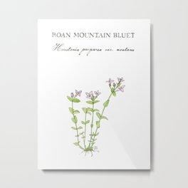 Roan Mountain Bluet Botanical Illustration Metal Print