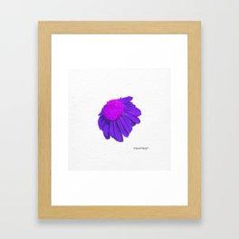 Coneflower Echinacea - Purple Framed Art Print