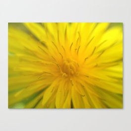 Lion's Tooth Canvas Print