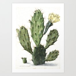 Vintage Cactus Illustration - 17th Century Art Print