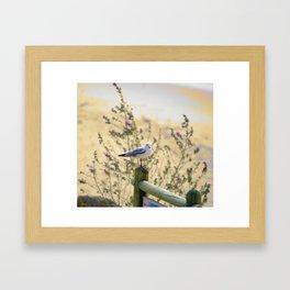 Resting Seagull Framed Art Print