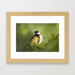 Great tit bird sitting on a twig inside an alpine forest Framed Art Print