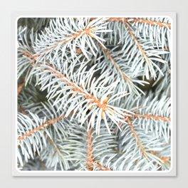 Tree | Trees | Silver Spruce | Ontario, Canada | Nadia Bonello Canvas Print