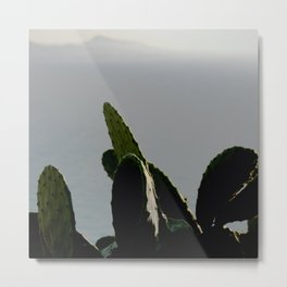 Cactus plants on a bright background Metal Print