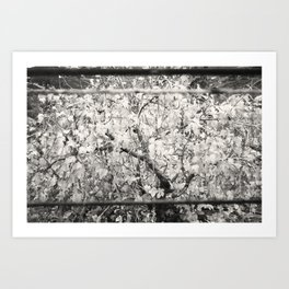 Colourless Tree Art Print