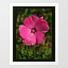 Bliss Pink Art Print
