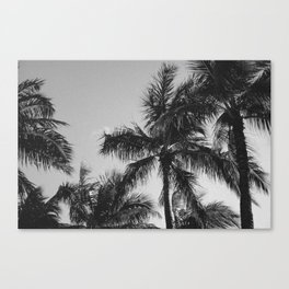 Hawaii- Palm Canvas Print