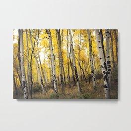 Aspen Trees of Colorado Metal Print