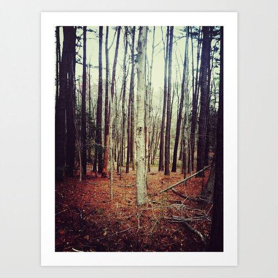 community of trees Art Print