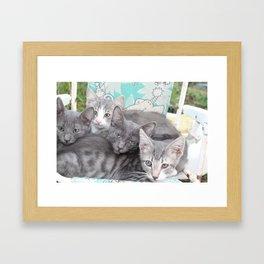 Cool toned kittys Framed Art Print