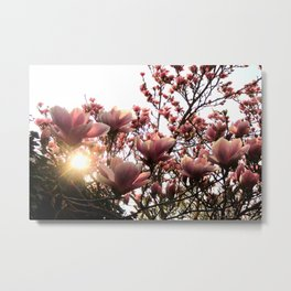 Magnolia Sunset Metal Print
