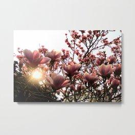 Magnolia Sunset Metal Print