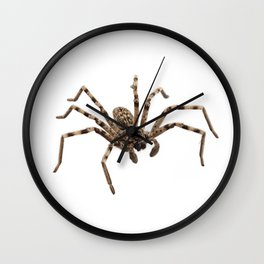 Wolf spider lycosa sp Wall Clock