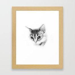 Tiger Cat Take Two  Framed Art Print
