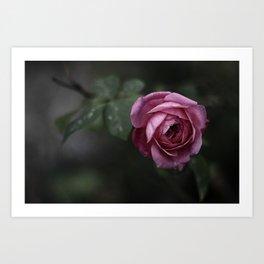 Garden Rose Art Print