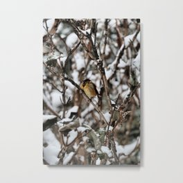 Friendly Freezing Metal Print