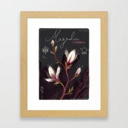 "Botanical illustration ""Magnolia Cylindrica"" Framed Art Print"
