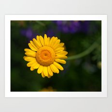 Yellow Daisy 4217 Art Print