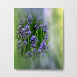 waiting for lavender blossoms  -05- Metal Print
