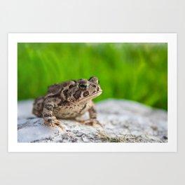 Getting Toad Art Print