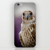 falcon iPhone & iPod Skins featuring Falcon  by Bader Al Awadhi