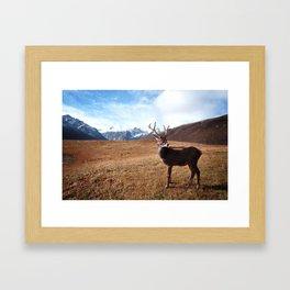 The Pure Deer Framed Art Print