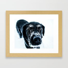 Snow Dog // Cross Country Skiing Black and White Animal Photography Winter Puppy Ice Fur Framed Art Print