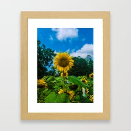 Giant Sunflower Framed Art Print