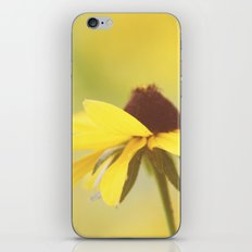 Amarillo Haze iPhone & iPod Skin