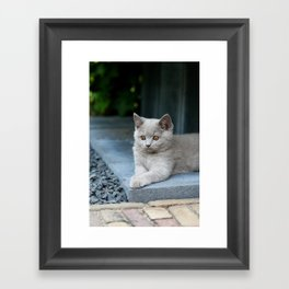 Bikkel the cat ! Framed Art Print