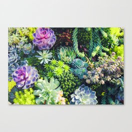 Beautiful Colorful Succulent Plant Garden Canvas Print